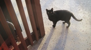 new soil & feral cat 010